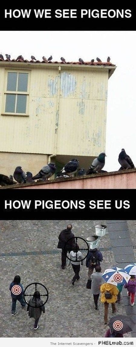 How pigeons see us at PMSLweb.com