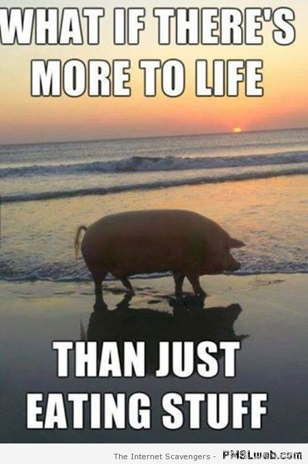 What if there's more to life than just eating stuff at PMSLweb.com