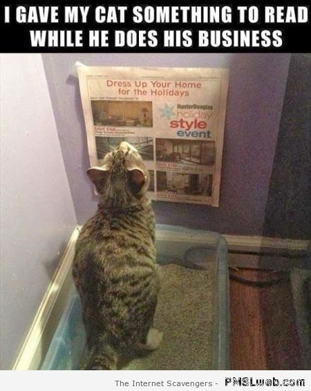 Cat reading in the kitty litter – Hump day PMSL at PMSLweb.com