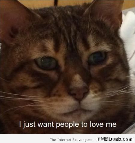 I just want people to love me cat meme at PMSLweb.com