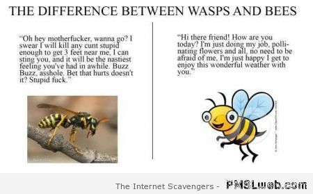 The difference between wasps and bees at PMSLweb.com