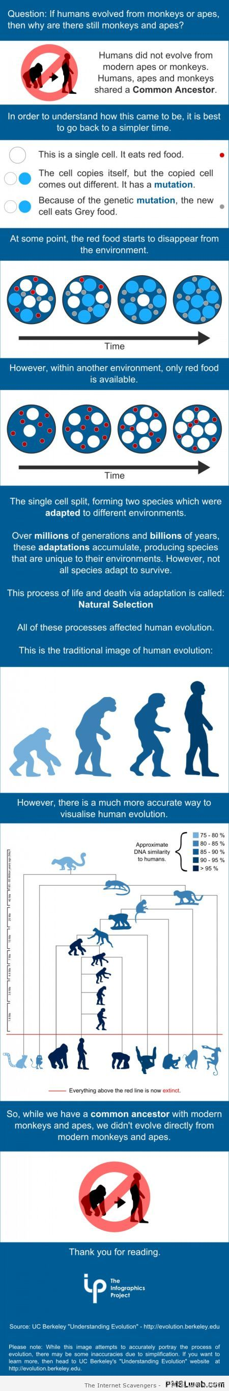 Evolution explained at PMSLweb.com