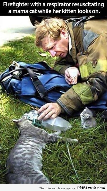 Firefighter resuscitating a mother cat at PMSLweb.com