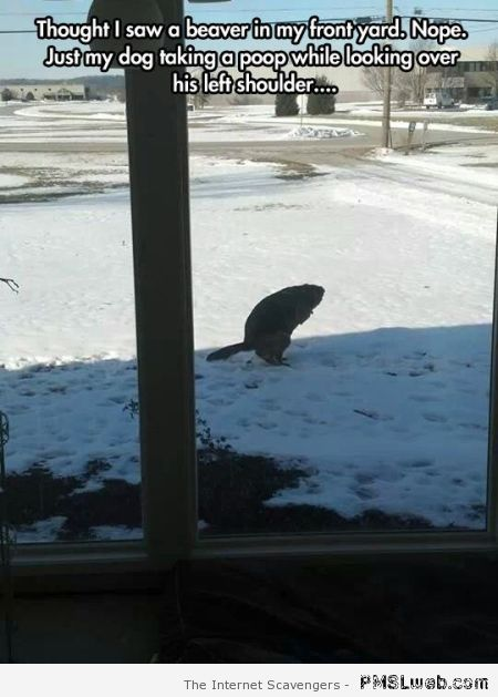 My dog taking a poop – Happy Monday funnies at PMSLweb.com