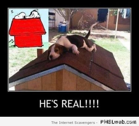 Snoopy is real demotivational at PMSLweb.com