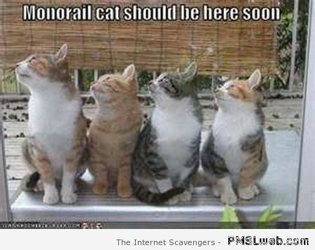 Monorail cat should be here soon at PMSLweb.com