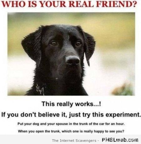 Who is your real friend humor at PMSLweb.com