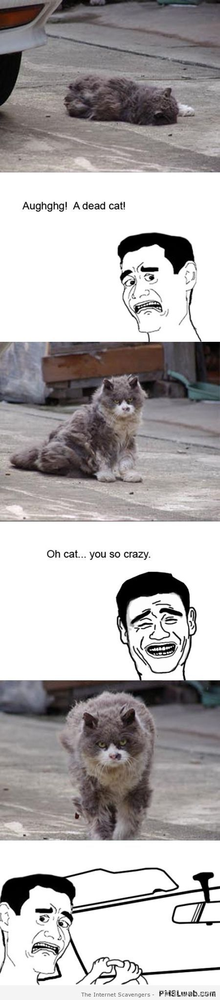 Scary cat meme at PMSLweb.com