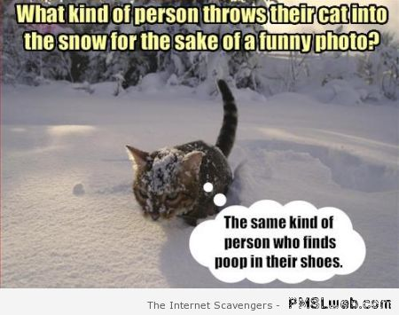 What kind of person throws their cat into the snow at PMSLweb.com