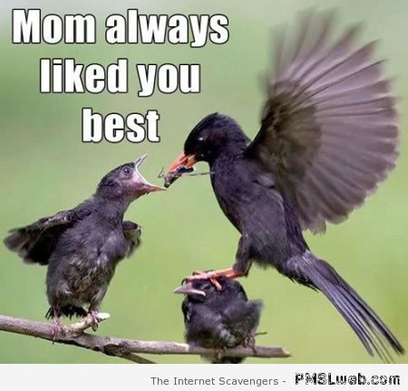 Mom always liked you best at PMSLweb.com