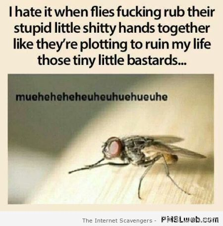When flies rub their hands funny at PMSLweb.com