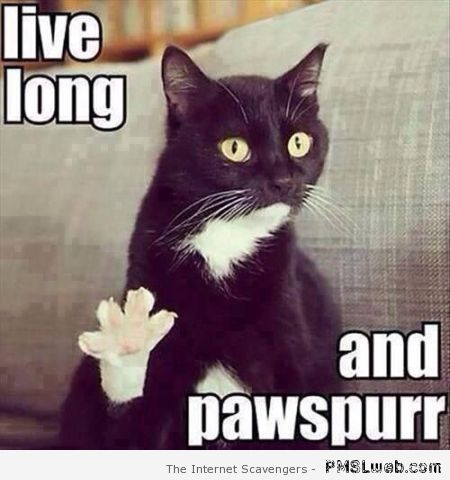 Live long and pawspurr meme – Funny Saturday pics at PMSLweb.com