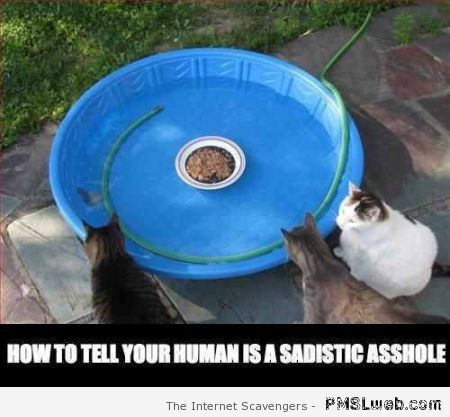 Your human is a sadistic a**hole meme at PMSLweb.com