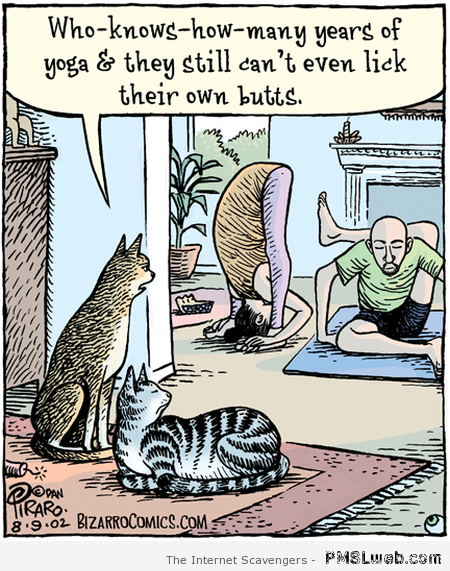 Yoga seen by cats funny at PMSLweb.com