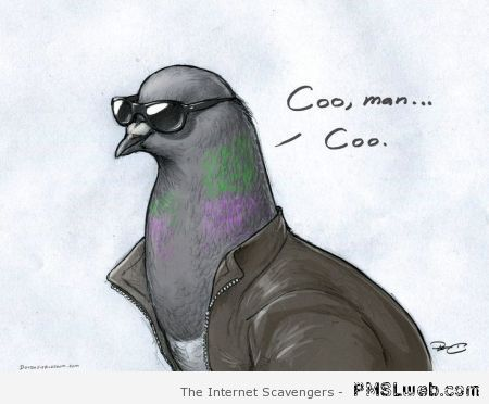 Coo man pigeon cartoon at PMSLweb.com