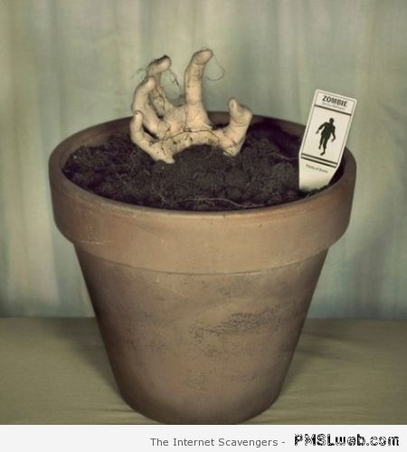 Zombie pot plant – Monday playtime at PMSLweb.com