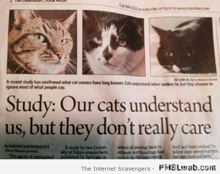 Cats don't care news column at PMSLweb.com