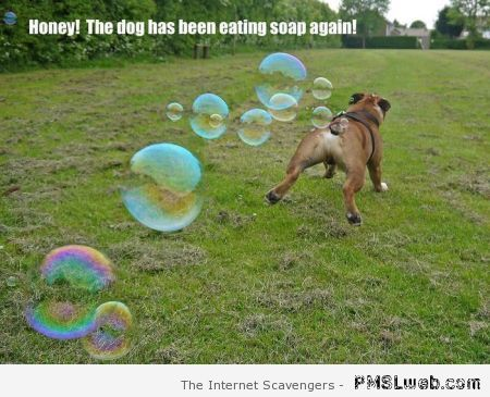 The dog has been eating soap again – Weekend madness at PMSLweb.com