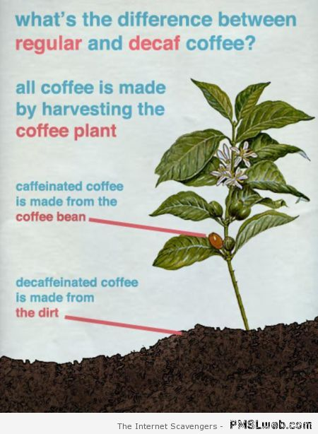 Difference between regular and decaf coffee at PMSLweb.com