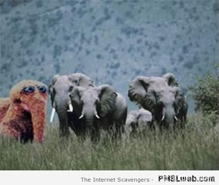Elephants funny at PMSLweb.com