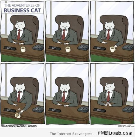 Adventures of business cat at PMSLweb.com