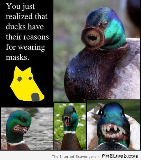 Why ducks wear masks – Funny Saturday at PMSLweb.com