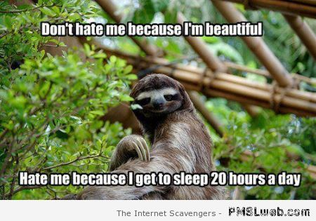 Lazy sloth meme at PMSLweb.com