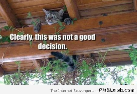 This was not a good decision cat meme at PMSLweb.com
