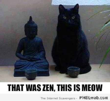 This is meow – Tuesday funny pics at PMSLweb.com