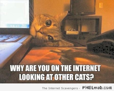 Why are you looking at other cats meme at PMSLweb.com