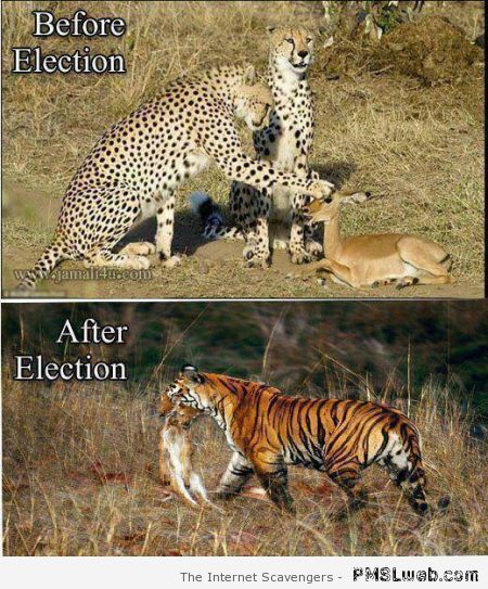 Before versus after election humor at PMSLweb.com