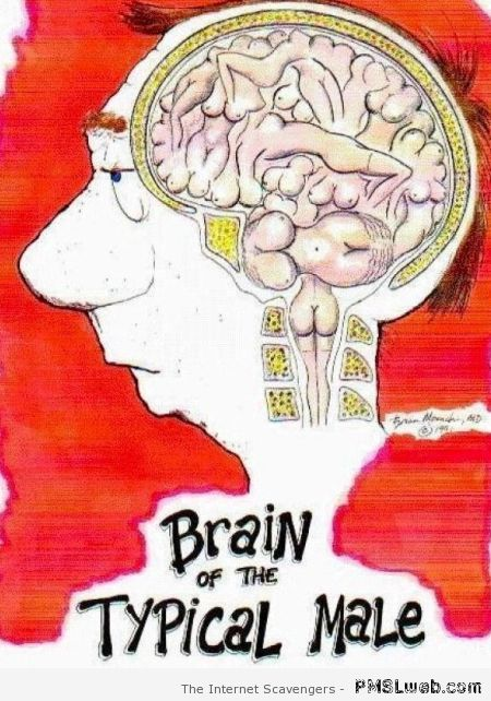 Brain of the typical male humor at PMSLweb.com