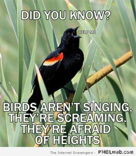 What birds are actually saying meme at PMSLweb.com
