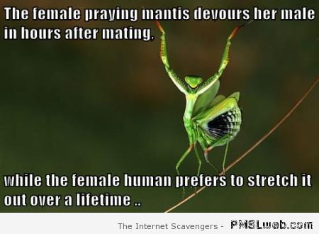 The female praying mantis versus the female human meme at PMSLweb.com