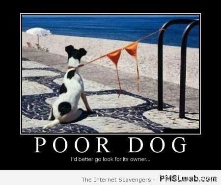 Poor dog demotivational at PMSLweb.com