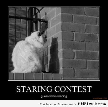 Cat staring contest demotivational at PMSLweb.com