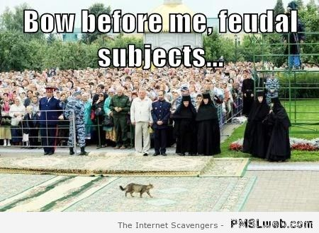 Bow before me cat meme – Tuesday funny pics at PMSLweb.com