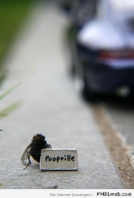 Fly hiking to poopville at PMSLweb.com