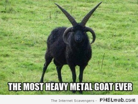 The most heavy metal goat ever at PMSLweb.com