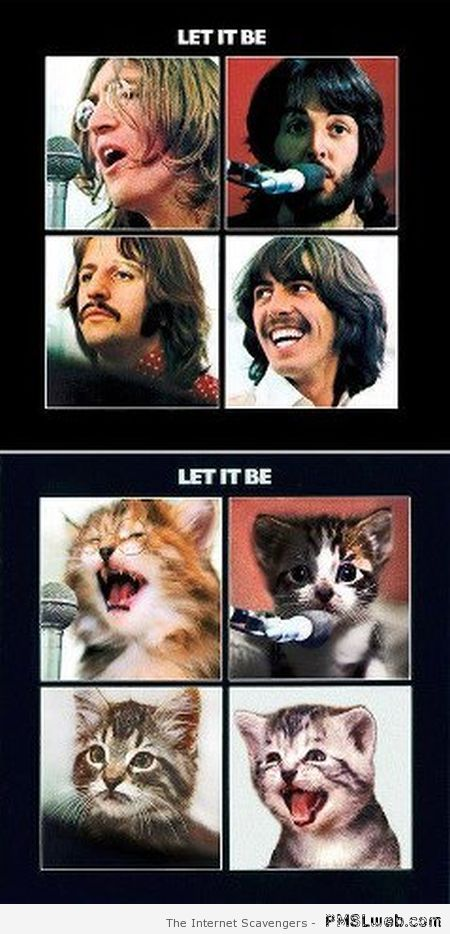 Funny beatles kittens – Funny music at PMSLweb.com