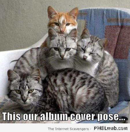 Our cover pose – Funny cat pics at PMSLweb.com