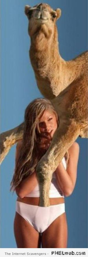 Camel toe humor – Funny Hump day images at PMSLweb.com