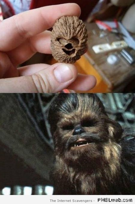 Wookie nut humor at PMSLweb.com