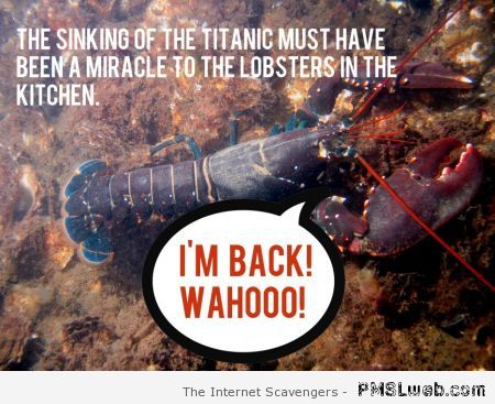 Lobsters in the kitchen humor – TGIF laughter at PMSLweb.com