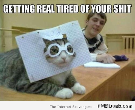 Cat is tired of your shit meme at PMSLweb.com