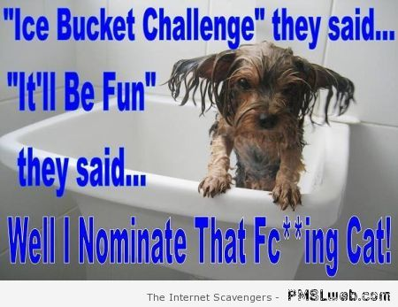 Ice bucket challenge dog version at PMSLweb.com