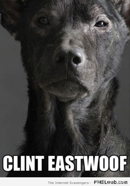 Clint Eastwoof dog meme at PMSLweb.com