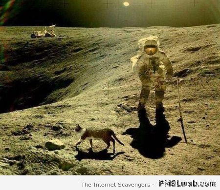 Cat on the moon at PMSLweb.com
