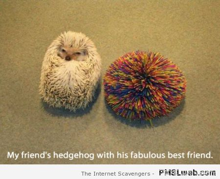 Hedgehog's fabulous friend – Humorous Hump day at PMSLweb.com