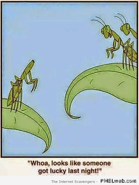 Funny praying mantis cartoon at PMSLweb.com
